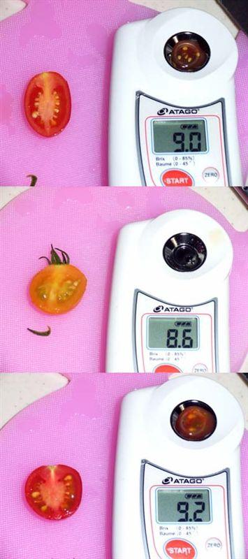 アイコ,トマキッズ オレンジ,トゥインクルの糖度