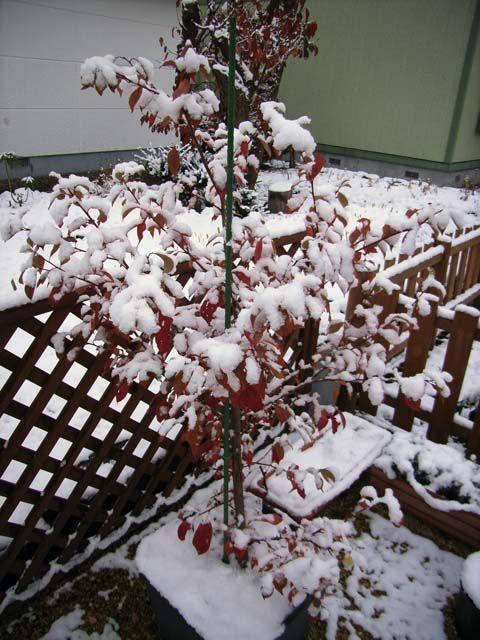 積雪(貴陽)