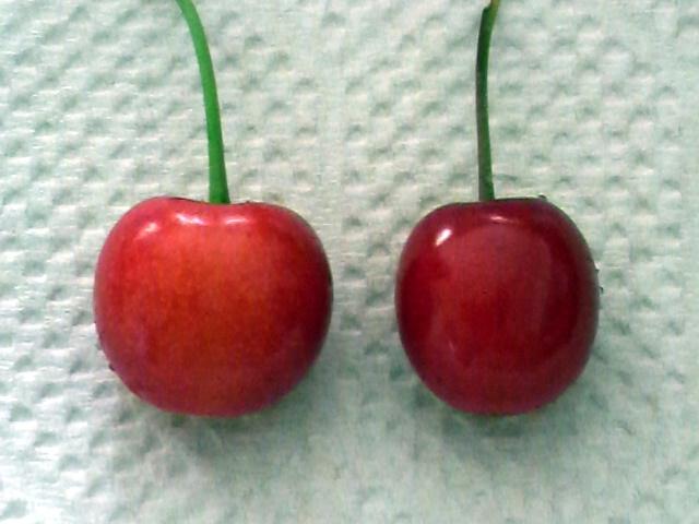 佐藤錦(左)/紅さやか(右)