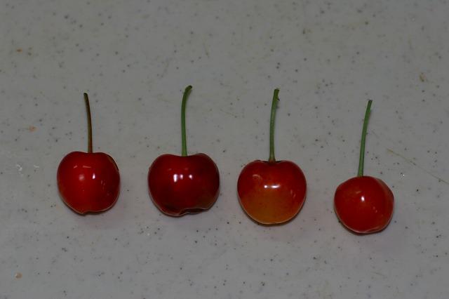 4種のさくらんぼ