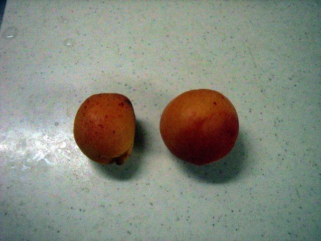 ゴールドコット(左)/紅太陽(右)
